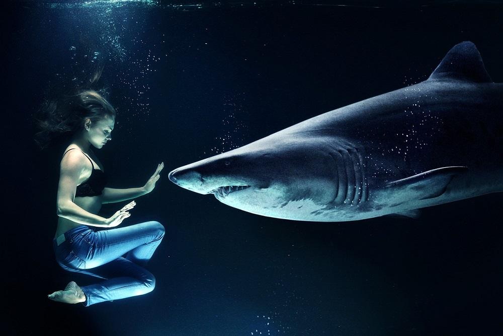 V moři byznysu se pohybují i žraloci, kteří prahnou po Vašich penězích. Nenechte se snadno obalamutit!